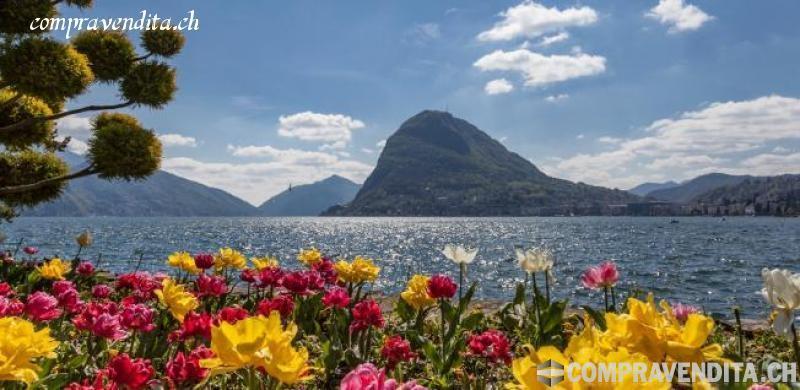 Si cede spazio commerciale in centro Lugano SicedespaziocommercialeincentroLugano.jpg