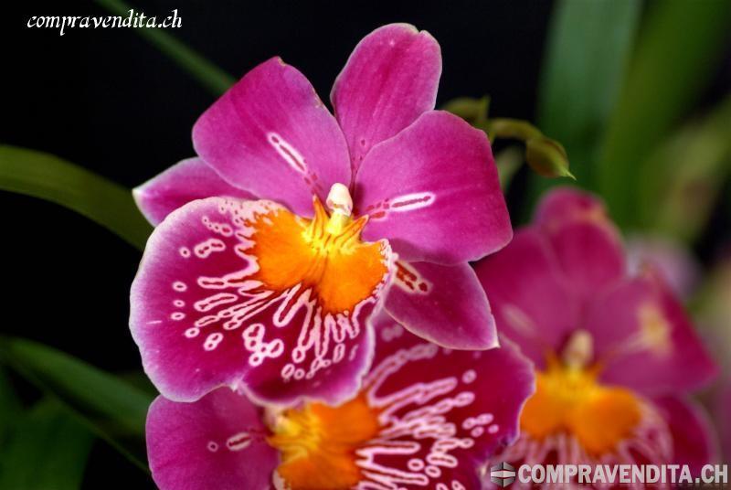 Vendiamo attività di fiorista nel Locarnese. VendiamoattivitdifioristanelLocarnese.jpg