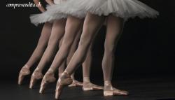Cedesi prestigiosa scuola di ballo in Ticino
