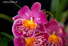 Vendiamo attività di fiorista nel Locarnese.